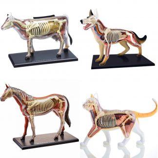 Modelos Anatómicos Animales